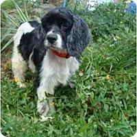 Adopt A Pet :: Paris - Sugarland, TX
