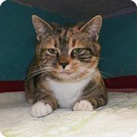 Adopt A Pet :: Perdita - Dover, OH