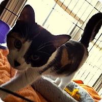 Adopt A Pet :: Riley - Berkeley Hts, NJ