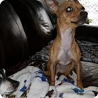 Adopt A Pet :: Skipper - Arlington, TN