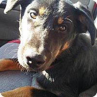 Adopt A Pet :: Diesel - Iowa, Illinois and Wisconsin, IA