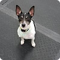 Adopt A Pet :: Prince - Plainfield, IL