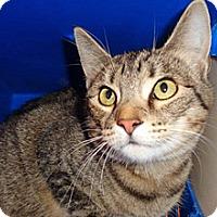 Adopt A Pet :: Tibbers - Wildomar, CA