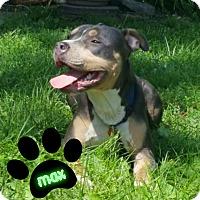 Adopt A Pet :: Max - Des Moines, IA