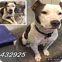 Adopt A Pet :: FEO - San Antonio, TX