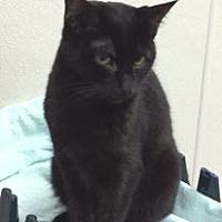 Adopt A Pet :: Stephen - Bartlesville, OK