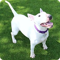 Adopt A Pet :: Bayliss - Loxahatchee, FL