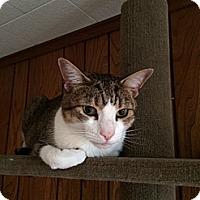 Adopt A Pet :: Bobby - Plainville, MA