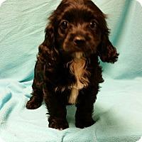 Adopt A Pet :: Aldora - Hazard, KY