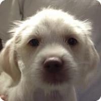 Adopt A Pet :: Dougie - Canoga Park, CA