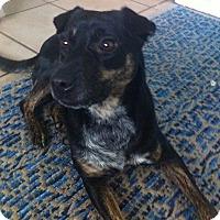 Adopt A Pet :: Lisa PB - Schertz, TX