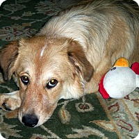 Adopt A Pet :: Lily - New Canaan, CT