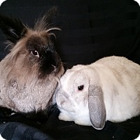 Adopt A Pet :: Olaf & Scamp - North Gower, ON