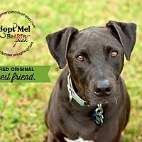 Adopt A Pet :: Emerson - Pearland, TX