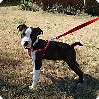 Adopt A Pet :: Butch (has been adopted) - Burlington, VT