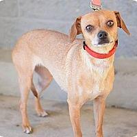 Adopt A Pet :: GRETCHEN (Sandy) - Modesto, CA