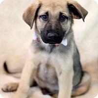 Adopt A Pet :: Nick Austin - Dalton, GA