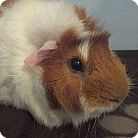 Adopt A Pet :: Duncan & Bradly - Pittsburgh, PA