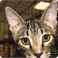 Adopt A Pet :: Duncan - San Ramon, CA