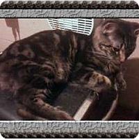 Adopt A Pet :: Monkey - Jacksonville, FL