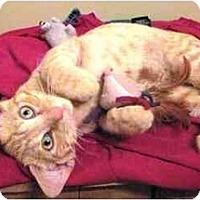 Adopt A Pet :: Tabor - Warren, OH