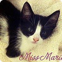 Adopt A Pet :: Marion - Santa Monica, CA
