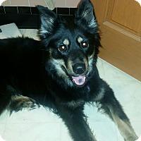 Adopt A Pet :: Annie - Toledo, OH