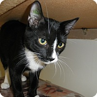 Adopt A Pet :: Bermuda - Milwaukee, WI