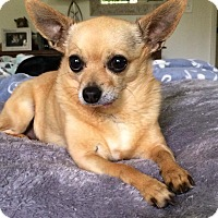 Adopt A Pet :: Gina - Los Angeles, CA