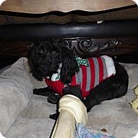 Adopt A Pet :: Buttons - Antioch, IL