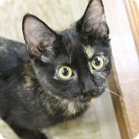 Adopt A Pet :: Belinda - Medina, OH