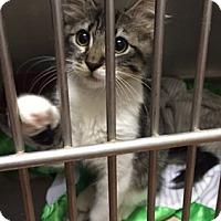 Adopt A Pet :: ThomasCV - North Highlands, CA
