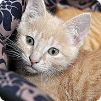 Adopt A Pet :: Aske - Fort Leavenworth, KS