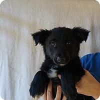 Adopt A Pet :: Juju - Oviedo, FL