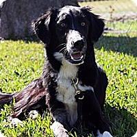 Adopt A Pet :: Zeke - Dallas, TX