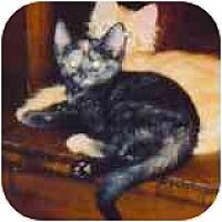 Adopt A Pet :: Paisley - Fayette, MO