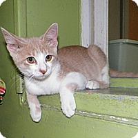 Adopt A Pet :: Brian - Dover, OH