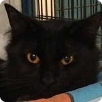 Adopt A Pet :: Hennessy - Deerfield Beach, FL