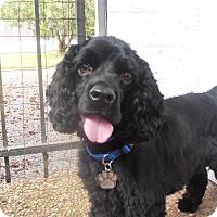 Adopt A Pet :: Landon - Sugarland, TX