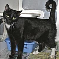 Adopt A Pet :: Kiki - Salisbury, NC