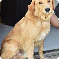 Adopt A Pet :: Spirit - New Canaan, CT