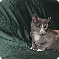 Adopt A Pet :: Prancer - Medina, OH