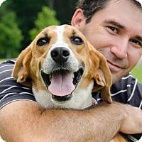 Adopt A Pet :: Antoinette - Midlothian, VA