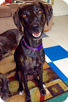 Hound (Unknown Type)/Whippet Mix Dog for adoption in Grand Rapids, Michigan - Georgia