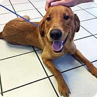 Adopt A Pet :: Creel - BIRMINGHAM, AL