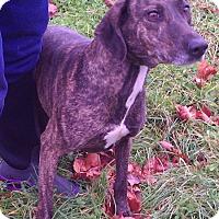 Adopt A Pet :: Roxie - Metamora, IN