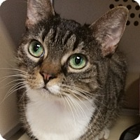 Adopt A Pet :: Dusty - Franklin, NH