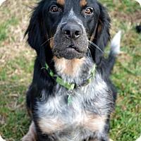 Adopt A Pet :: Gabby - Westport, CT