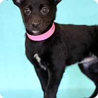 Adopt A Pet :: Lagertha - Waldorf, MD