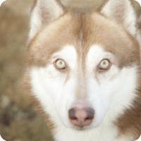 Adopt A Pet :: Myles - Harvard, IL